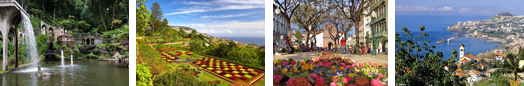 Incentive programmes and team building in Madeira Island